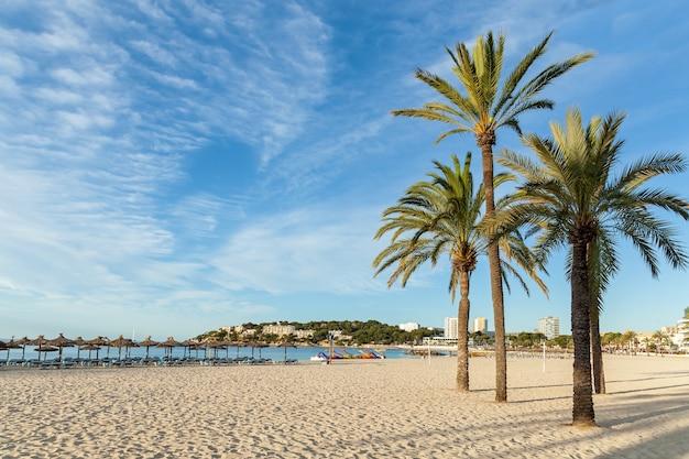 Costa con palme e capannoni,spiaggia con palme