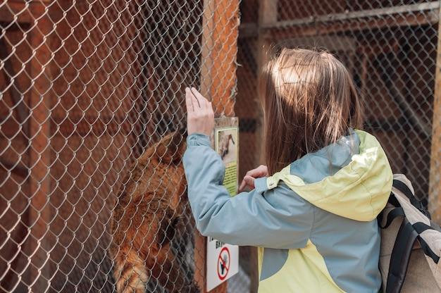 Un coati si arrampica su una griglia di una gabbia nello zoo di famiglia. la ragazza cerca di nutrire l'agile nasua attraverso le sbarre. animali selvaggi senza volontà