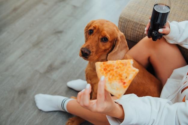 Il cane cocker spaniel guarda la pizza con occhi tristi