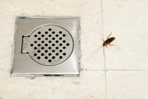 Scarafaggio in bagno vicino al foro di scarico. il problema con gli insetti. gli scarafaggi si arrampicano attraverso le fogne.