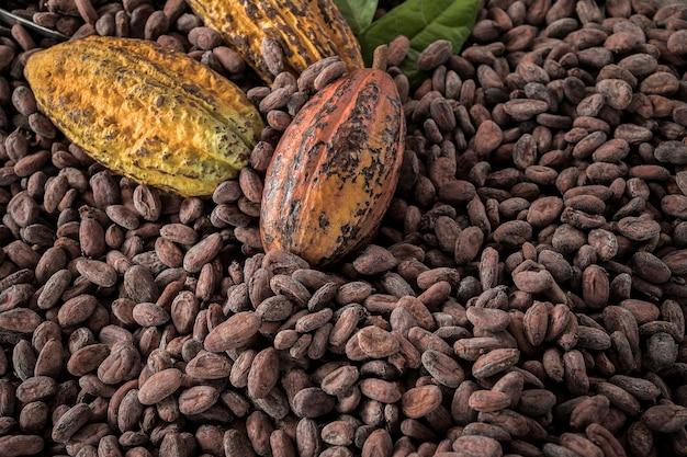 Fave di cacao e frutti di cacao su legno