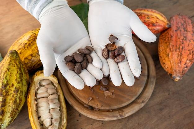 Baccelli di fave di cacao, pezzi di tavoletta di cioccolato, cacao in polvere, ingredienti per fare cioccolatini.