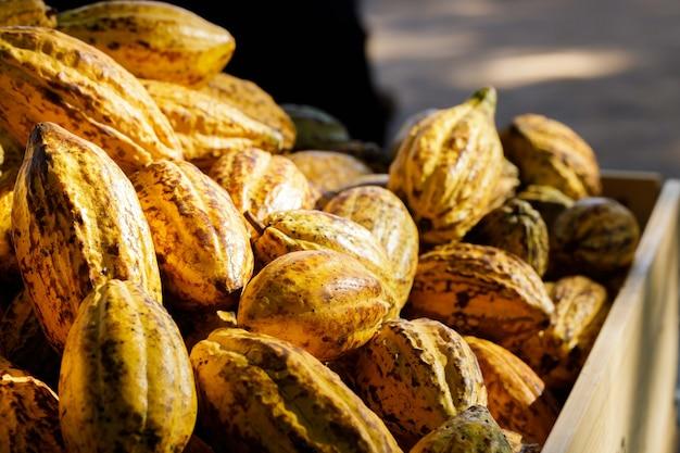 Primo piano delle fave di cacao su una scatola di legno