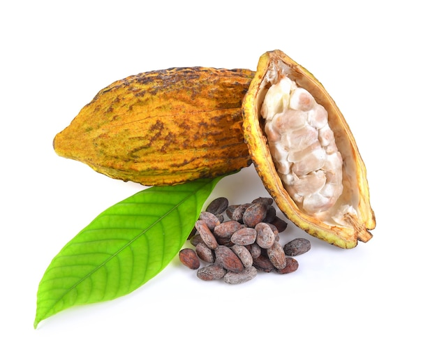 Frutti di cacao isolati su sfondo bianco