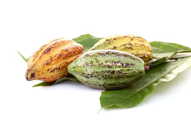 Baccelli di cacao con foglia di cacao su un bianco