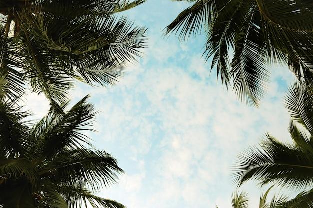 Cornice foglia di cocco con cielo blu nel concetto di estate