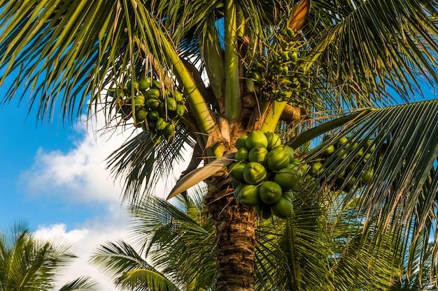 Palma da cocco sulla spiaggia e un cielo blu nuvoloso.