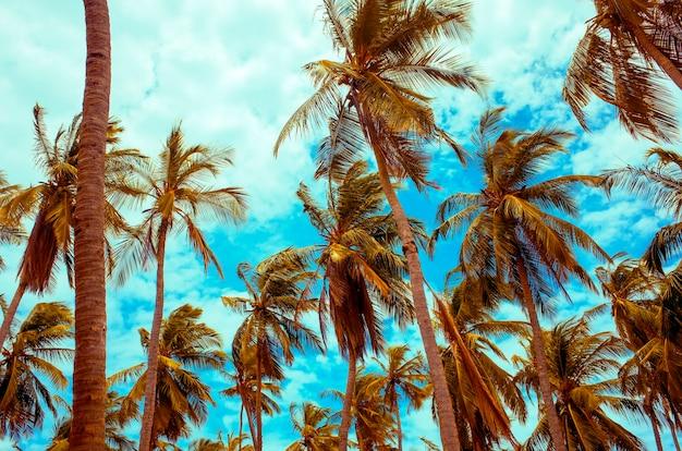 Palma da cocco sotto il cielo blu
