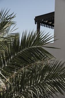 Foglie di palma da cocco. sfondo di natura tropicale esotica bella estate