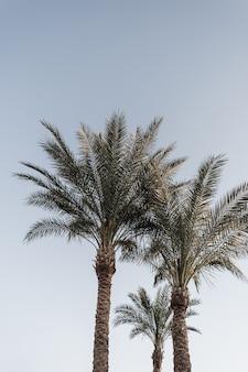 Palme da cocco. bella natura tropicale esotica estiva