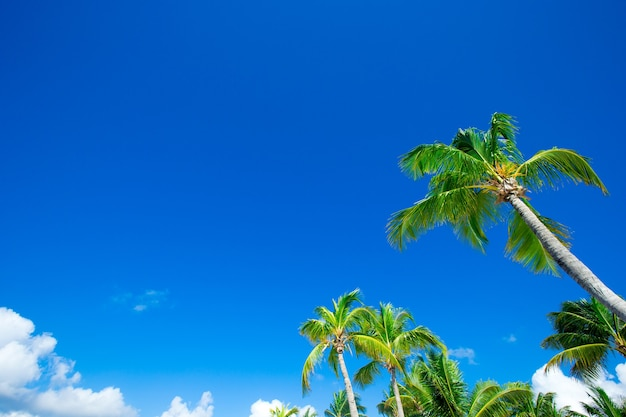 Palme da cocco, bellissimo sfondo tropicale