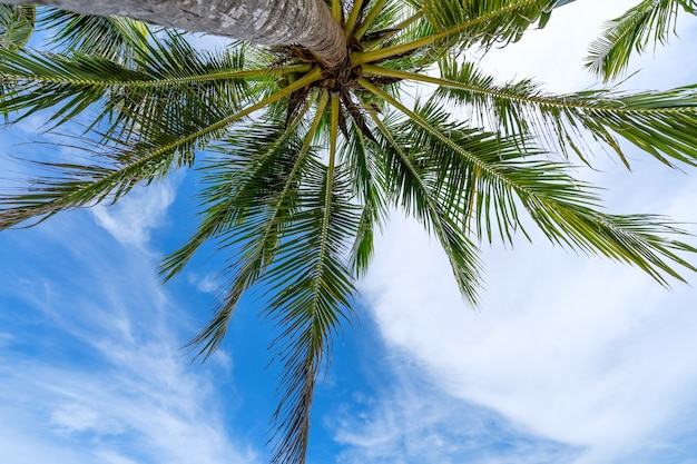 Palme da cocco sul cielo blu e nuvole bianche sullo sfondo come si vede dal basso estate e concetto di sfondo di viaggio.