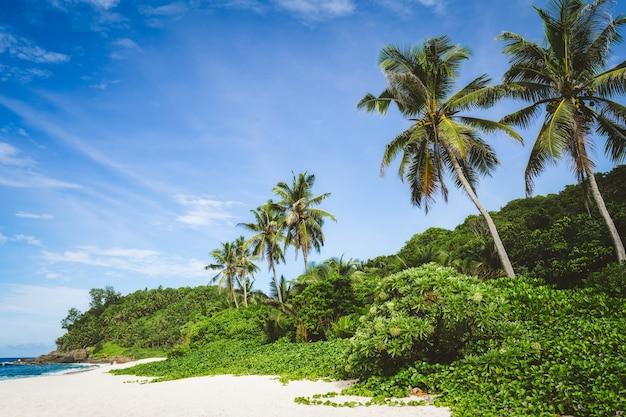 Palme da cocco e fogliame della giungla sulla spiaggia sabbiosa appartata tropicale contro un cielo blu.