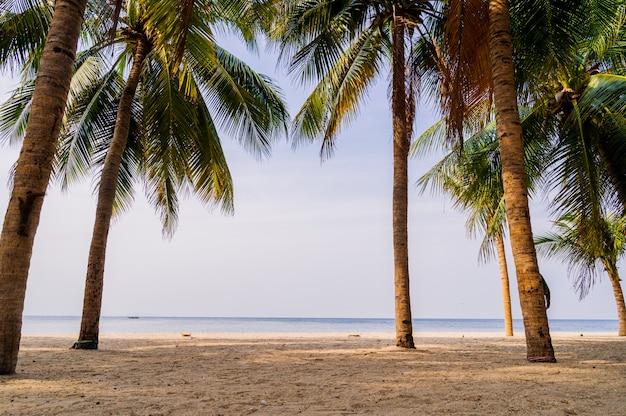 Alberi del cocco con il concetto di estate del cielo e delle nuvole di tramonto