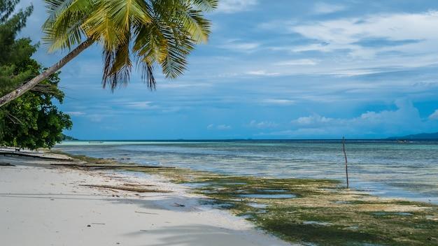 Palme da cocco vicino alla stazione di immersione sull'isola di kri, raja ampat, indonesia, papua occidentale.