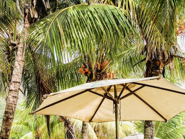 Albero di cocco sulla spiaggia del mar dei caraibi. isola delle palme. mare, spiaggia e cielo blu. riposo estivo.