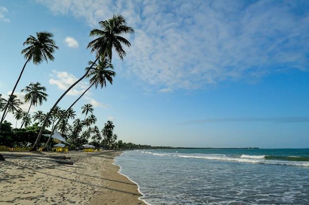 Albero di cocco nel tardo pomeriggio a porto de galinhas spiaggia vicino a recife pernambuco brazil