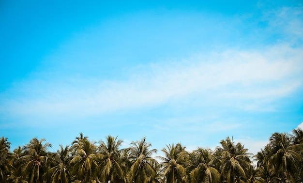 Fila di cocco in spiaggia tropicale con cielo azzurro e nuvole. sfondo tono vintage estivo.