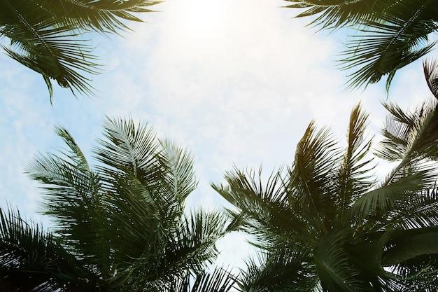 Alberi di cocco e sfondo azzurro del cielo