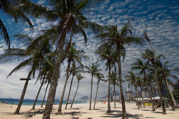 Alberi di cocco sulla spiaggia di copacabana rio de janeiro in brasile.