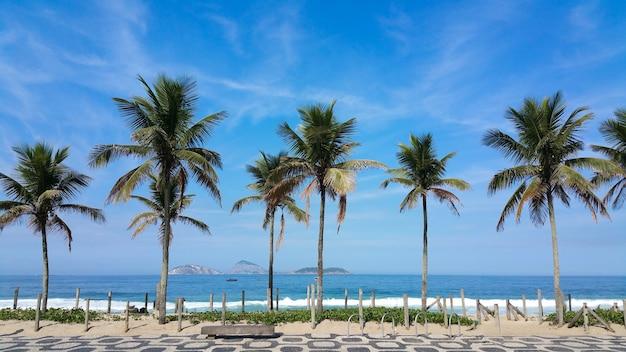 Alberi di cocco sulla spiaggia di ipanema rio de janeiro in brasile.