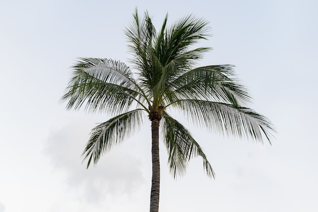 Palma delle noci di cocco su uno sfondo di cielo.