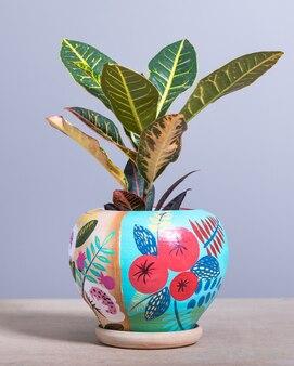 Codiaeum petra, croton nel portavaso colorato dipinto a mano