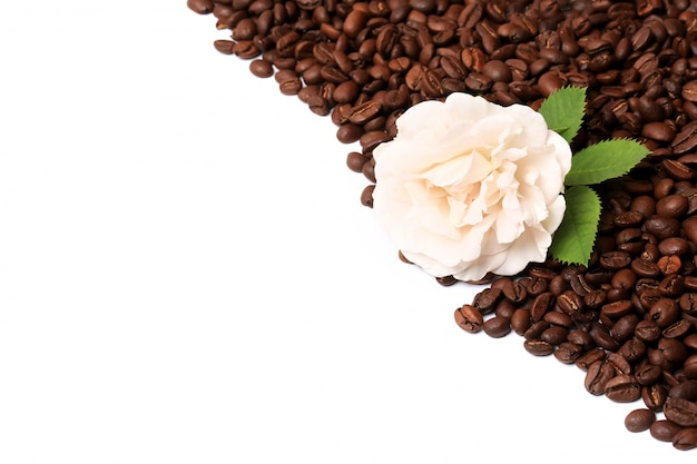 Rosa bianca dei chicchi di caffè isolata sull'angolo bianco del confine del fondo un posto per il testo di pubblicità