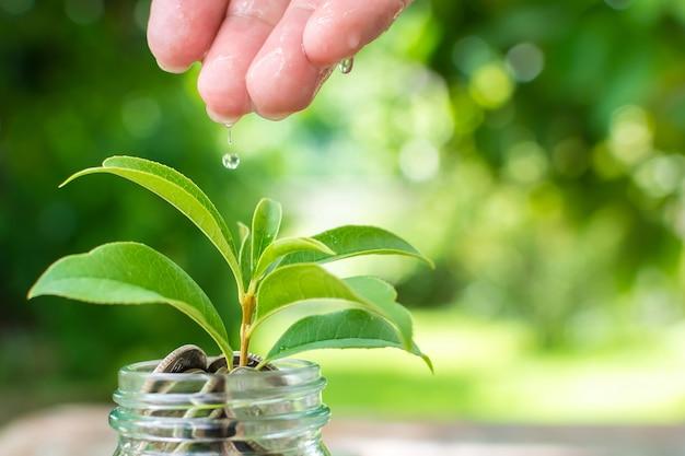Coin in barattolo con la crescita delle piante, risparmiare denaro e il concetto di investimento