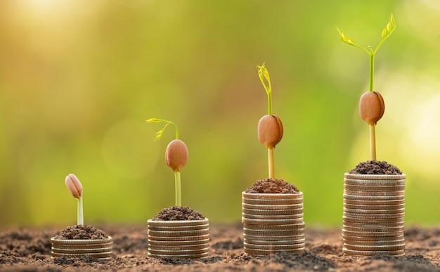 Pila di monete con giovane germoglio verde in cima. successo aziendale, concetto finanziario o crescente di denaro