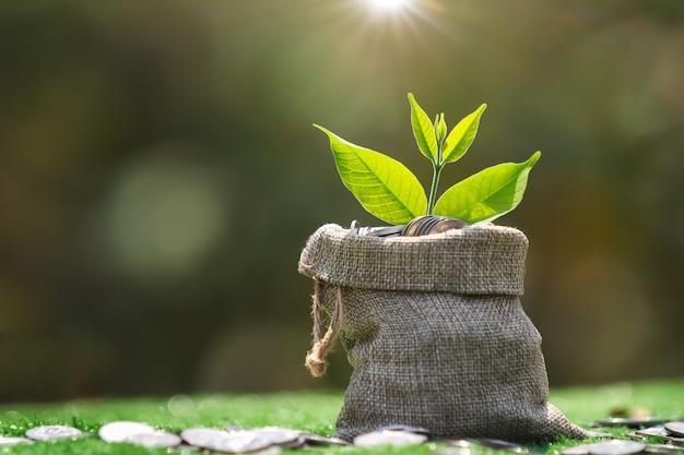 Monete in borsa in tessuto con crescita delle piante sull'erba verde. risparmio e crescita del concetto di denaro