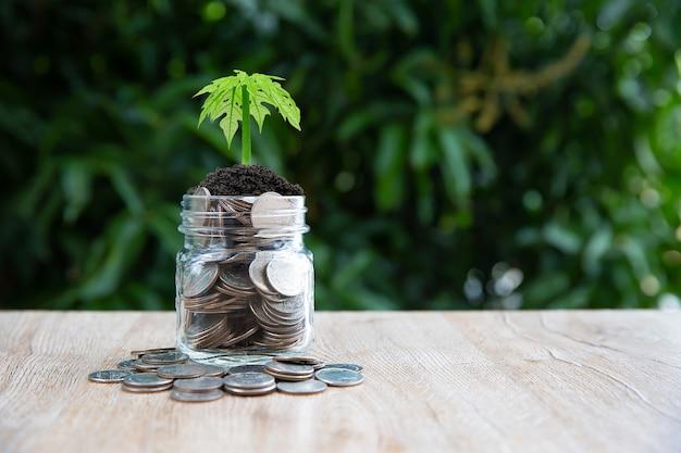 Le monete sono in un salvadanaio con un albero che cresce.