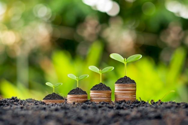 Monete e piante vengono coltivate su una pila di monete per la finanza e le banche. l'idea di risparmiare denaro e aumentare le finanze.