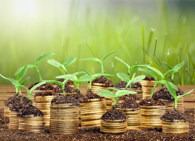 Monete nel terreno con piante giovani sullo sfondo