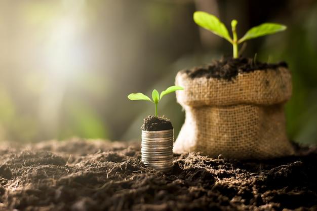 Monete accatastate su terreno fertile.
