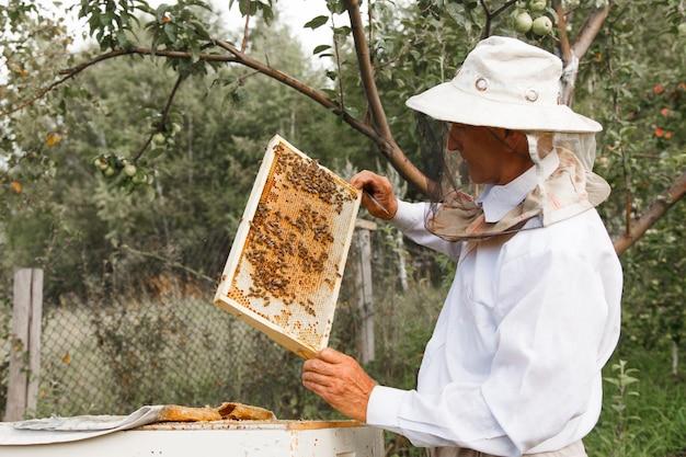 Raccogli il miele: primo piano a nido d'ape. lavori di apicoltura: api, favi, miele