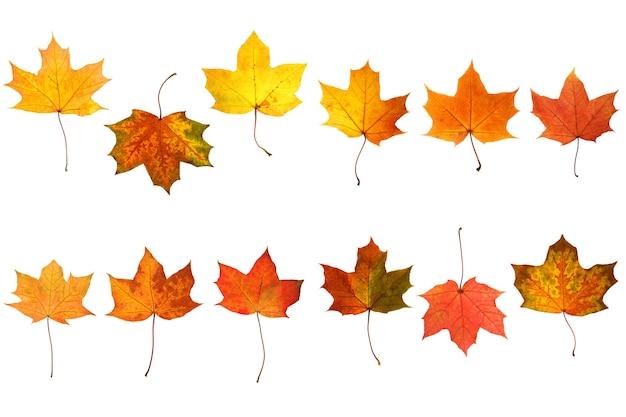 Raccolta di bellissime foglie autunnali isolate su sfondo bianco
