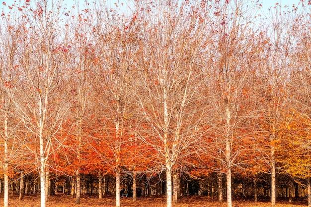 Collezione di bellissime foglie autunnali colorate / verde, giallo, arancione, rosso