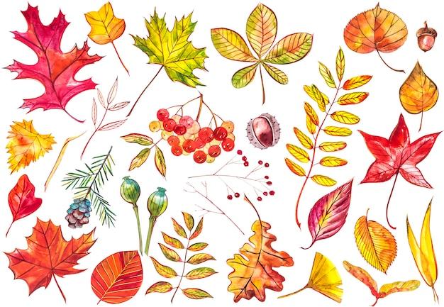 Belle foglie di autunno variopinte della raccolta isolate. illustrazioni ad acquerelli.