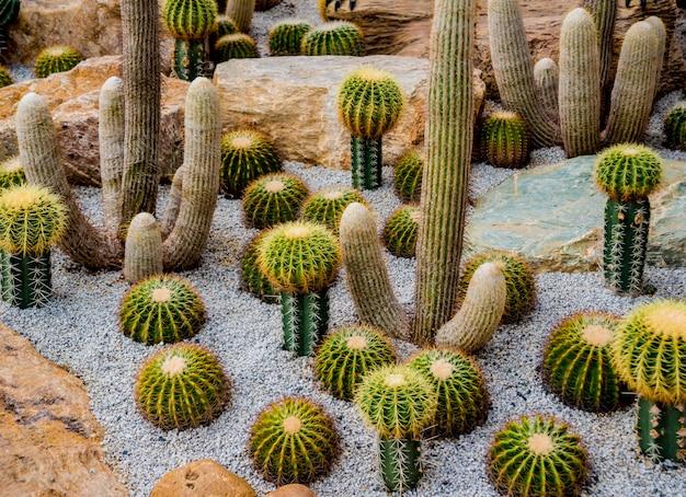 Collezione di bellissimi cactus spinosi nella serra
