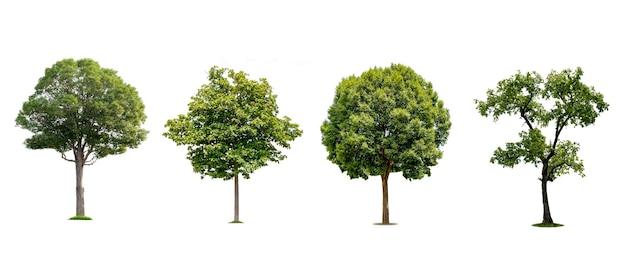 Una collezione di bellissimi alberi isolati su uno sfondo bianco ideale per l'uso nella progettazione architettonica, nelle pubblicazioni e nella decorazione di siti web.