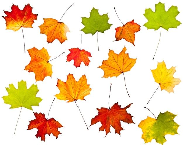 Raccolta di foglie autunnali colorate isolate su bianco