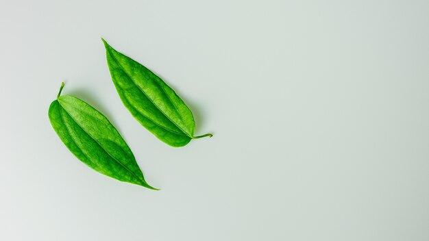 Raccolta delle foglie verdi sullo scrittorio bianco.