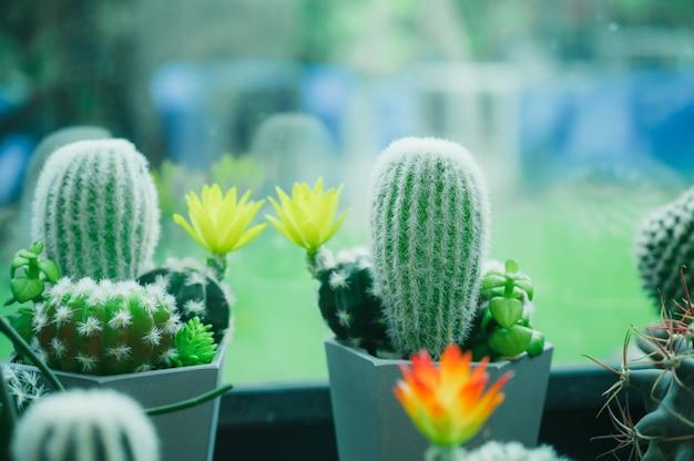 Collezione di rari cactus in vaso da vendere e decorare per lo sfondo