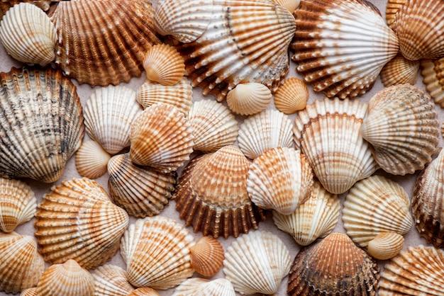 Collezione di conchiglie su una superficie pastello superficie marina naturale