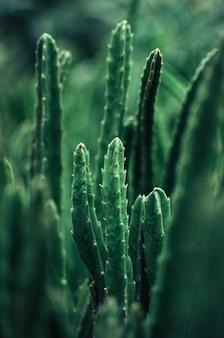 Una collezione di piante grasse, cactus, echeveria kalanchoe e piante succulente da appartamento. le piante grasse vengono coltivate in serra al sole. concetto di pianta da interno per la decorazione. messa a fuoco selettiva.