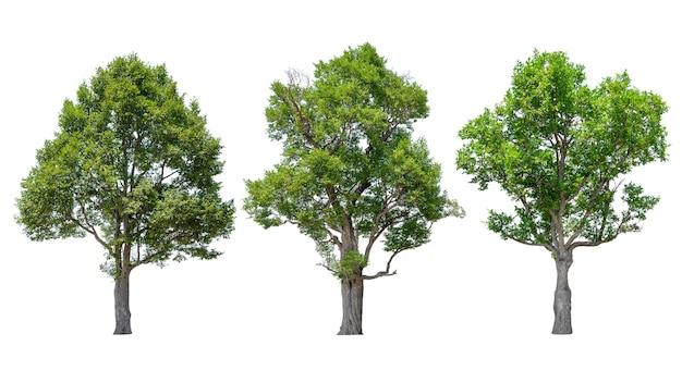 Raccolta di alberi isolati su sfondo bianco