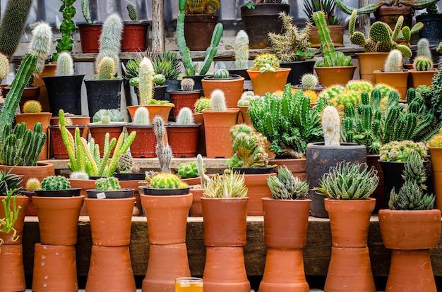 Raccolta di varie piante di cactus in diversi vasi