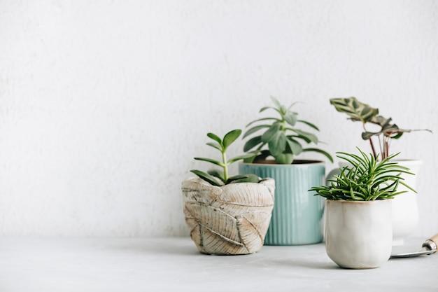 Raccolta di varie piante di cactus e succulente in vasi diversi.