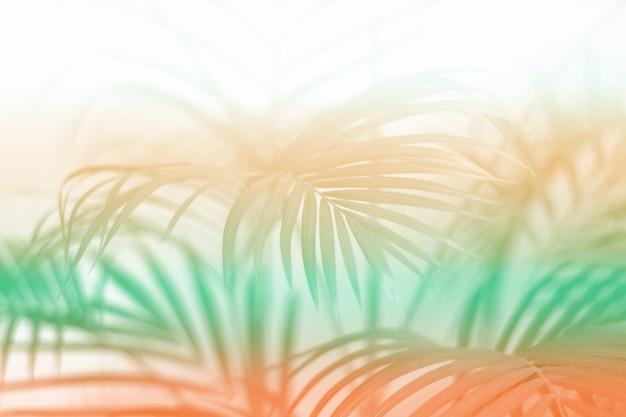 Foglia di palma tropicale colorata con ombra sul muro bianco